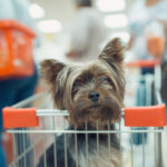 a puppy in a shopping cart